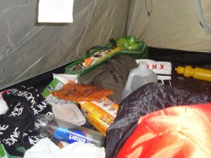 Foraging in the tent during WTM 2011
